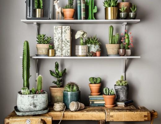 Plantagen-apr16-kaktusar-01-700x818