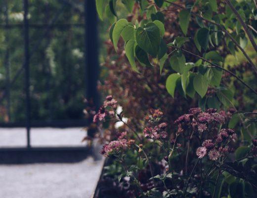 trädgård trädgårdsinspo växthus plantering odlingslåda